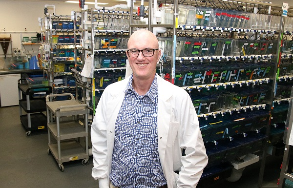 Prof Shane Grey to lead gene therapy for type 1 diabetes