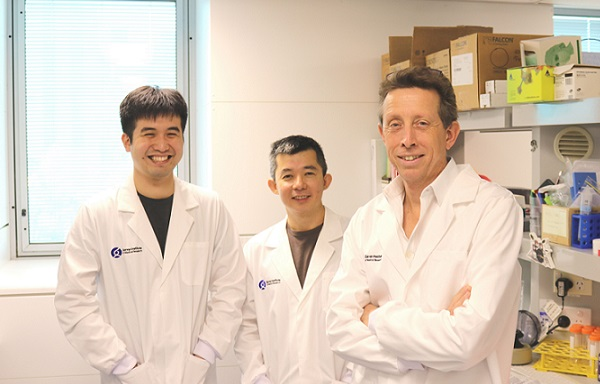 Researchers reveal key to targeting dormant cancer cells