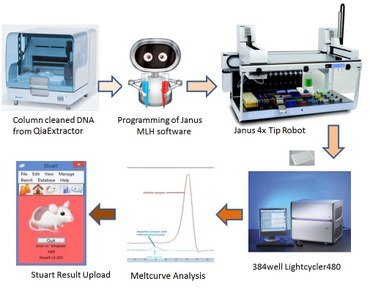 Mouse Genotyping Workflow