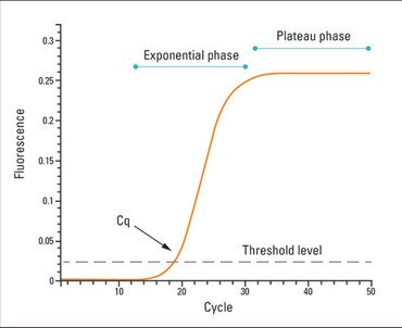 Realtime Probe chemistry PCR pic