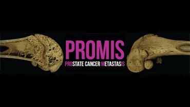 ProMis Theme Image
