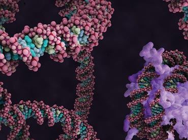 Representation of a DNA molecule
