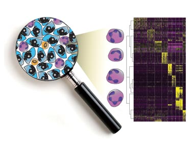 Single-cell transcriptomics of MDSC cells from breast tumours