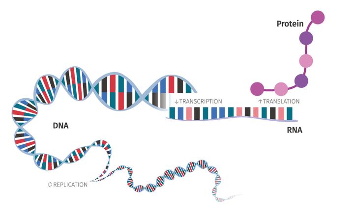 genomics_illo_dogma_community_noshadow.png