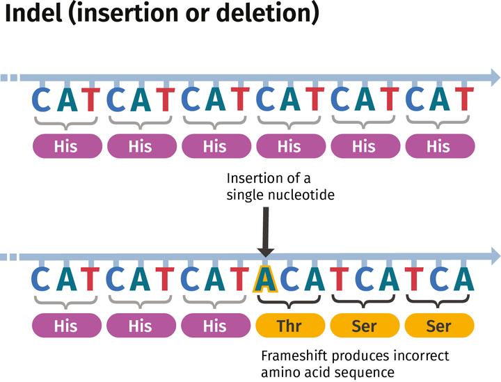 genomics_illo_indel_caption.png