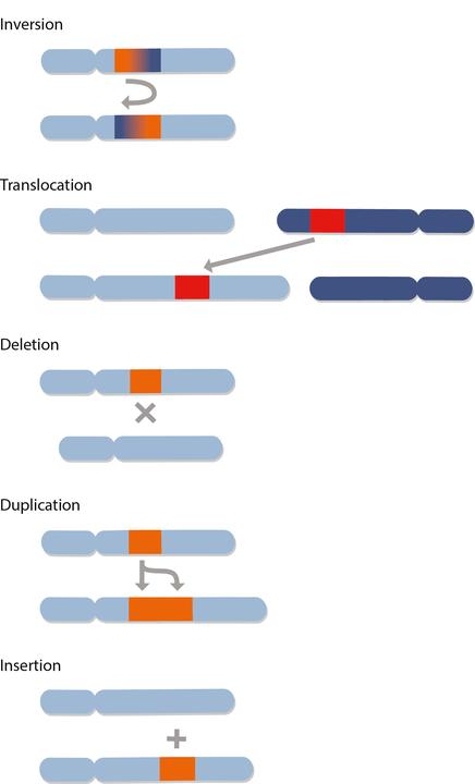 genomics_illo_structvar.png