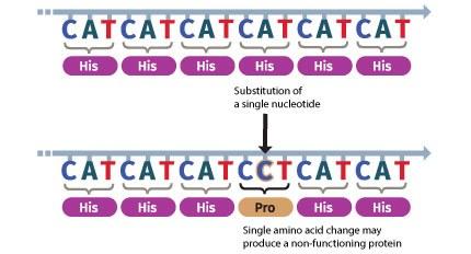 GR_genomics_illo_SNV_caption.jpg